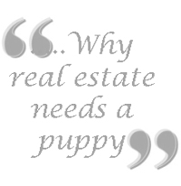 Real Estate Needs a Puppy